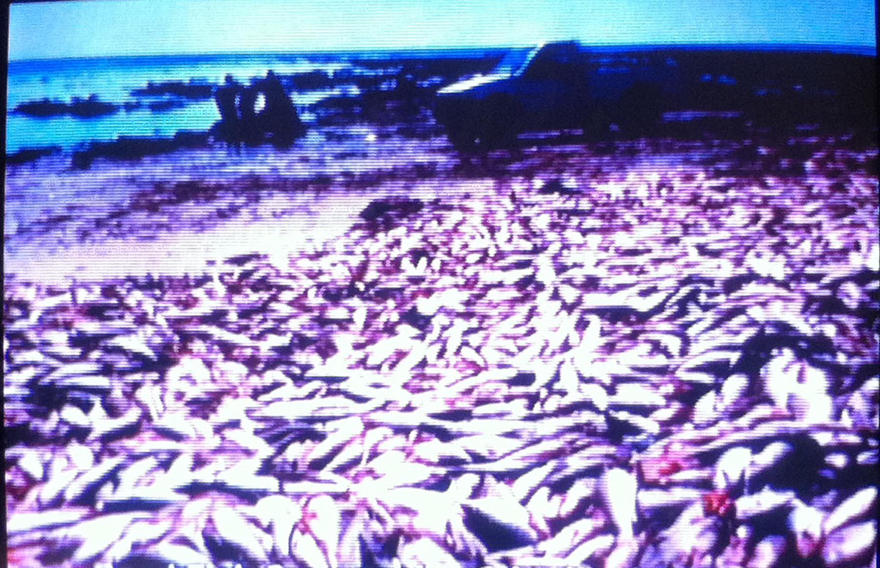 Dee finney 39 s blog september 29 2013 page 570 john for Pacific ocean radiation fish