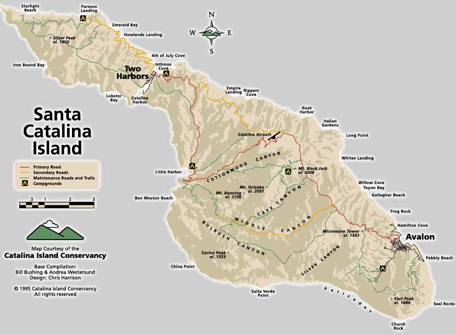 "The Tree of Life: A ""work"" trip to Catalina Island: USC ..."